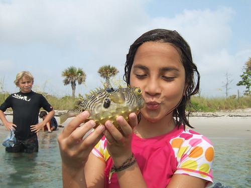 Pucker up burrfish