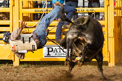 Do Not Mess With Me (David Tao Photography) Tags: cowboy ride bull rodeo queanbeyan