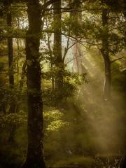 Wood Land (Roksoff) Tags: glenaffric lochaffric lochbeinnamheadhoin scotspine larch birch naturereserve water reflection mist fog landscape annich scottishhighlands scotland caledonianforest nikodd800 70200mmf28 leefilters