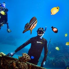 WATCHER WATCHED (Make a move ...) (ferlopez) Tags: batfish fish fishing longfinbatfish marinelife plataxteira spadefish spearfishing underwaterphotography wailea mauihawaii usa
