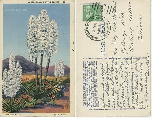 Yucca - Flower of the Desert