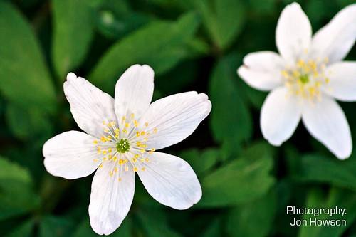 Ecclesall Woods Flowers-4.jpg