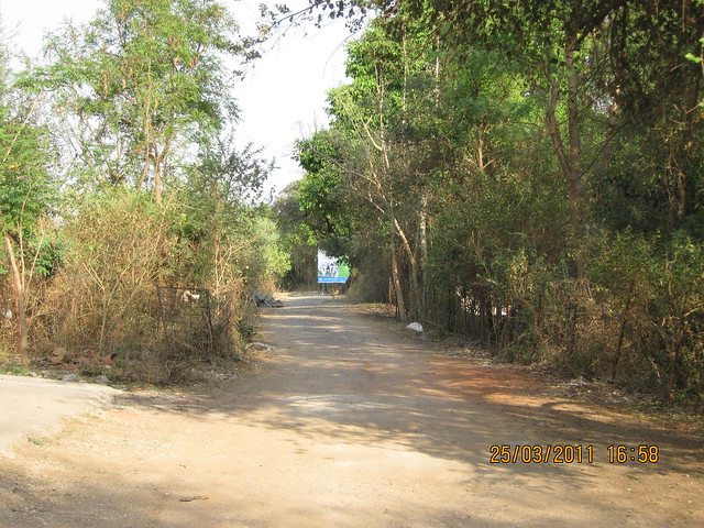 Tree-lined lane to DSK Gamdhakosh, behind Prathamesh Park, at Balewadi Phata, Baner Pune