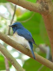 P1150855 (babsybou) Tags: travel india birds silent watching kerala du valley yatra sud inde attapadi birdswatching babsybou malleeshwaramjunglelodge pettickal