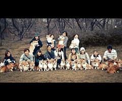 All we are smiling :) (moaan) Tags: friends dog digital corgi utata welshcorgi groupshot offlinemeeting 2011 explored gettyimagesjapanq2