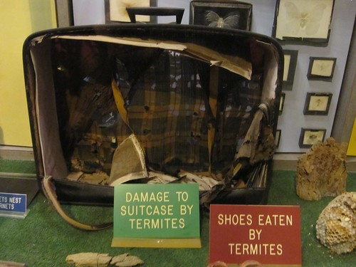 Damage To Suitcase By Termites