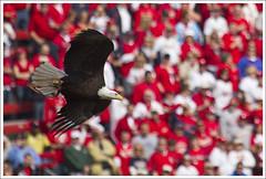 2011 Cardinals Home Opener 1