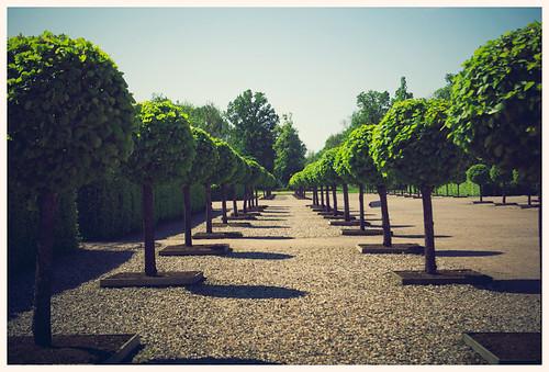 Alley_trees.jpg