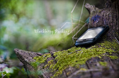 Blackberry Picking (JLM Photography.) Tags: wood tree green nature smart contrast forest countryside moss log technology phone blackberry bokeh smartphone gadget blackberrypicking ourdailychallenge jlmphotography