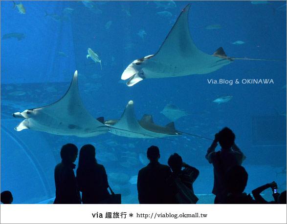 【沖繩景點】美麗海水族館~帶你欣賞美麗又浪漫的海底世界!30