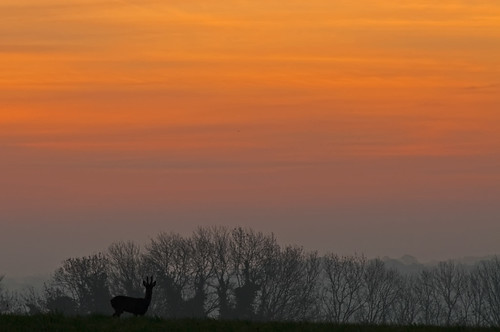 deer sunrise crop
