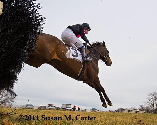 Humdinger, steeplechase race horse