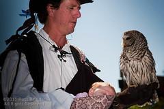 Baby, owl, handler... (Russ Beinder) Tags: vacation arizona baby bird az owl renaissancefestival handler talons 85mmf14
