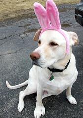 Zeus_bunny_411c