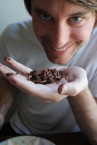 20110417. worm harvesting!
