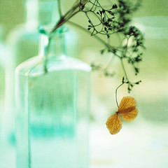 Hydrangea with bottled bokeh (borealnz) Tags: autumn light flower glass bottles bokeh dry clear hydrangea sprig oldglass smcpentaxda50135mmf28edifsdm flypapertextures