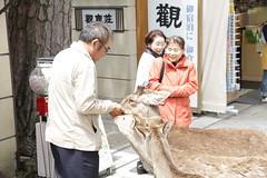Señor alimentando ciervos en Nara