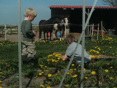 Paardebloemen plukken