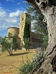 Sant'Antimo (Jambo Jambo) Tags: italy abbey nikon italia tuscany siena montalcino toscana olivetrees abbazia olivi santantimo castelnuovodellabate jambojambo