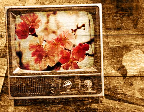 television blossom