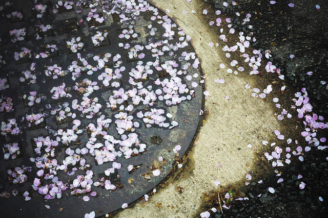 blossoms on the floor 4 (1 of 1)