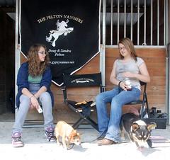 (The Pelton Vanners Gypsy Vanner Horses) Tags: horse gypsy pelton gypsyvanner gypsycob