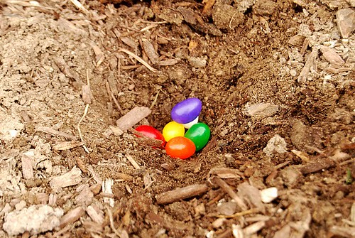 Planting Jelly Beans grows lollipops the next day