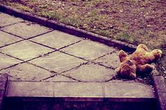 Lost Teddy Bear (C_MC_FL) Tags: bear street canon vintage children toy lost photography eos colours fotografie sad arm teddy pavement sold poor ground kinder plush forgotten lie stuffedanimal tragic tamron spielzeug gettyimages br farben softtoy boden verloren plschtier liegen traurig vergessen tragisch gehsteig strase 18270 60d b008
