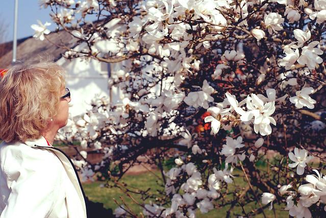 mom and magnolia