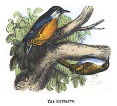 The Natural History of Selborne-1861  - 33