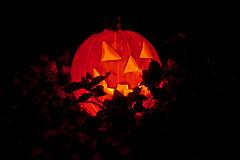Halloween at Dowsett