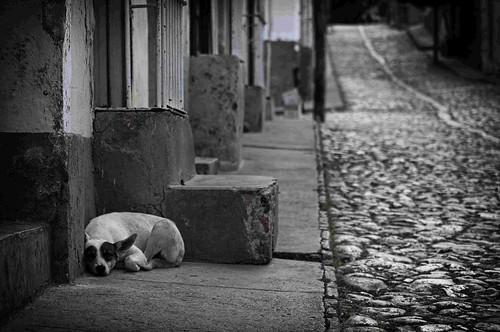 Ciudad de Perros.......Trinidad Cuba by Rey Cuba