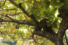 Naturaleza (Photography&Design) Tags: naturaleza hojas flora plantas foto natural guatemala flor vida fotos árbol hermosa forma expresión vivir florecer ecosistema floreciendo expresarvivir