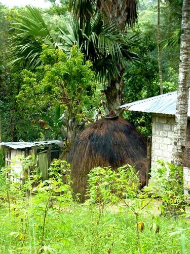 Timor Ouest-Kupang-Kefa (45)