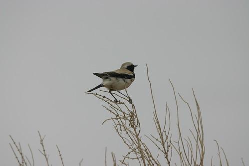 Какая-то птица в Баянзаге