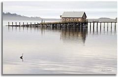 The home of the Great Blue Heron (walla2chick) Tags: usa seagulls house water oregon pier or garibaldi greatblueheron gbh tillamookbay 7376