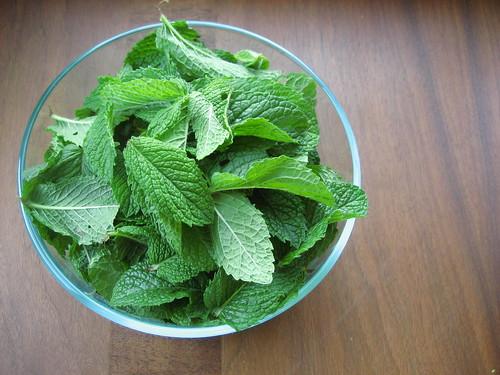 plucked mint