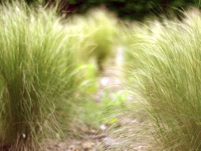 grass in kings bldgs