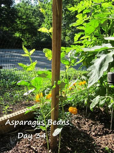 Asparagus Beans_34