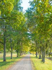 Jatilanraitti (MikeAncient) Tags: mntsl finland suomi syksy fall autumn foliage syksynlehdet puu puut tree trees