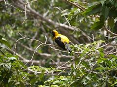 P2230410 (Gareth's Pix) Tags: aviarionacionaldecolombia baru colombia aviario bird