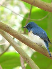 P1150847 (babsybou) Tags: travel india birds silent watching kerala du valley yatra sud inde attapadi birdswatching babsybou malleeshwaramjunglelodge pettickal