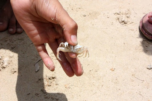 Crab wrestling5