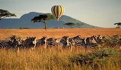 African Hotels, African Game Lodges, African Beach Resorts,African Safaris