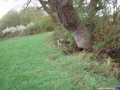 PistaHieloAzkBerriBideJaiotza_27.03.2011_29 (BerriBide) Tags: salida jaiotza azkarrak berribide