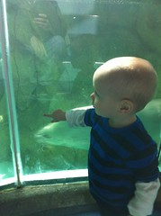 That blur is a sea otter swimming past