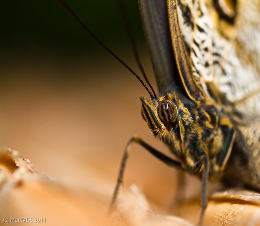 Sortie au Jardin des Papillons de Grevenmacher le 03 Avril 2011 : Les photos 5598919358_3ce7f20a38_o