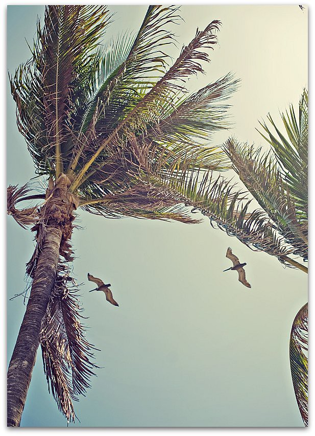 Florida beach 7
