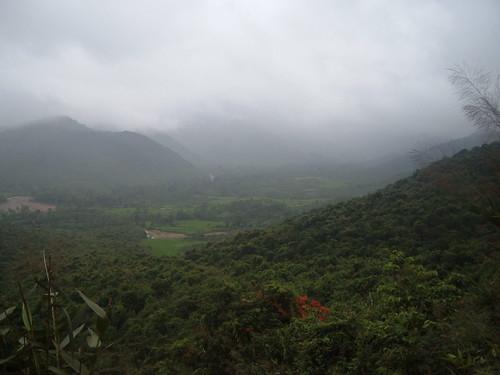 Bach Ma rainforest