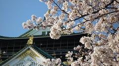 2011.4.7 天守と桜
